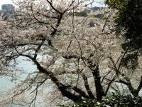 Parc Kitanomaru 2