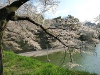Parc Kitanomaro 4