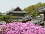 Palais de Changdeokgung (1)